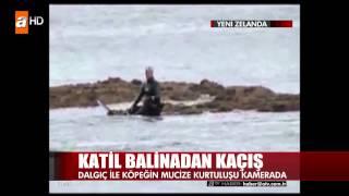 Katil Balina'dan Kaçış