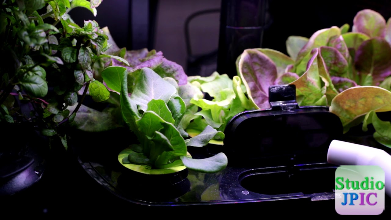 How To Add Nutrients And Water An Aerogarden Harvest Wi Fi Bounty Elite D14 Vlog Click Image For Larger Versionnamediagramjpgviews1317size156 Kbid