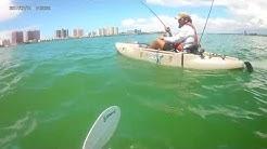 Hammerhead On the Kayak Clearwater, Florida