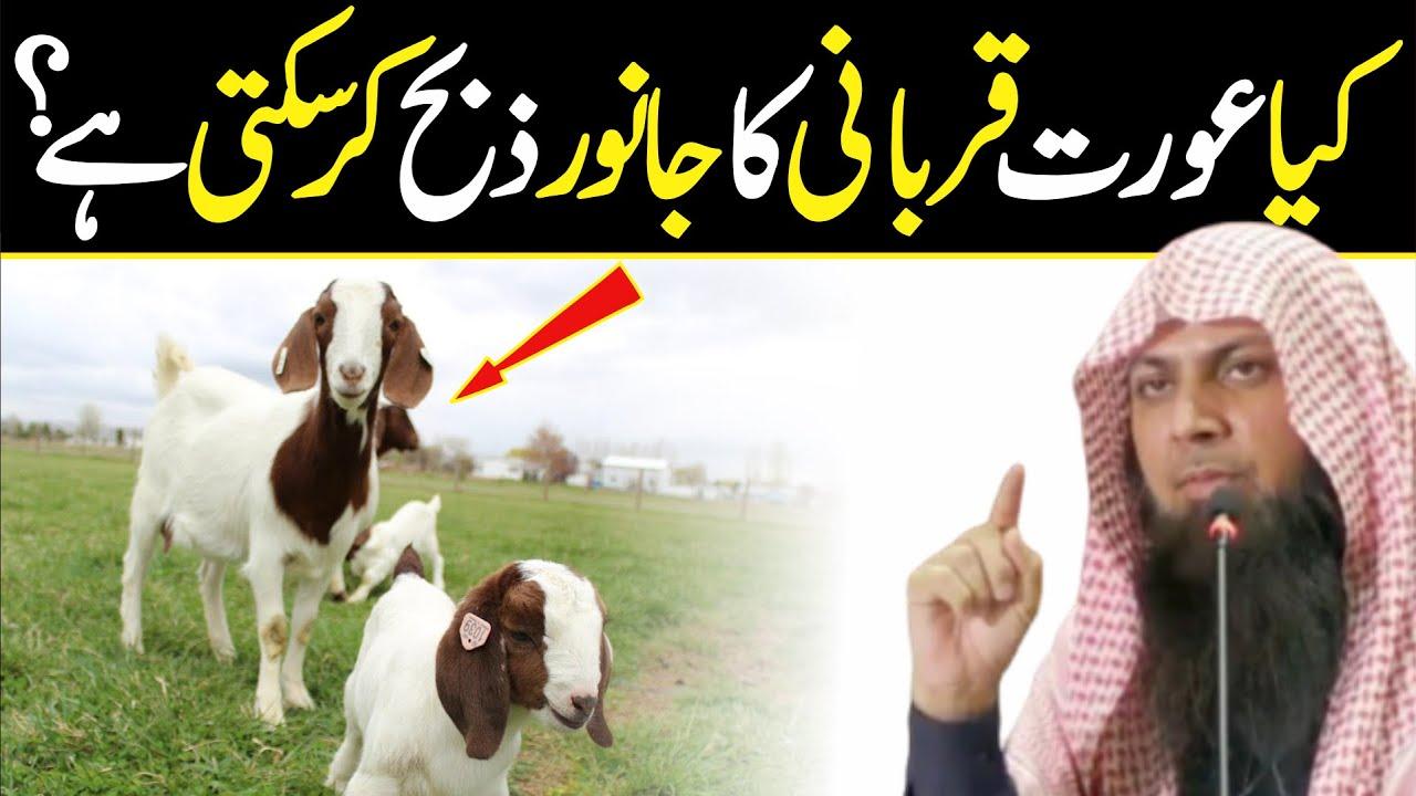 Kya Aurat Qurbani Ka Jabwar Ziba Kr Skti Hai | Qari Sohaib Ahmed Meer Muhammadi