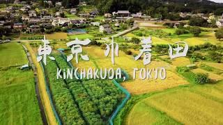 Kinchakuda, Tokyo Suburb 東京市郊 巾着田  |  4K UHD  |  Aerial 航拍 空撮 | Mavic Pro