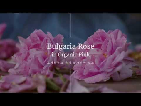 [비에코] 오가닉핑크 속의 불가리아 로즈 / [vieco]  Bulgaria Rose in Organic Pink