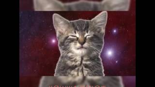 Котята поют ( МОЁ 1-ОЕ ВИДЕО