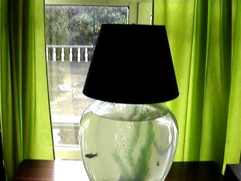 Old Bottle Of Wine Turned Into Lamp And Aquarium / 60 Litre Fish Tank And 3  Fish