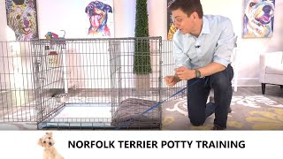 Norfolk Terrier Potty Training from WorldFamous Dog Trainer Zak George  Train a Norfolk Terrier