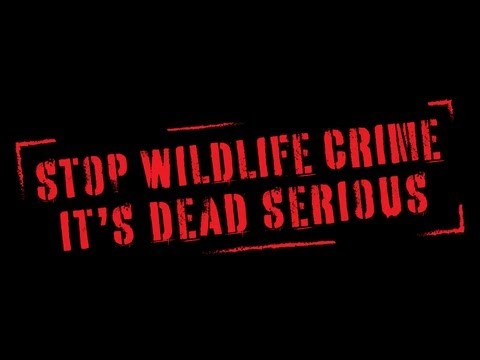 Stop Wildlife Crime: The Series | Official Trailer