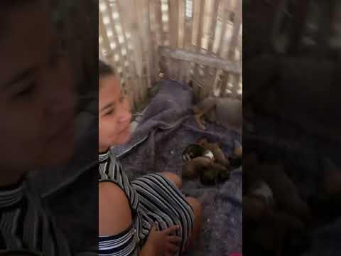 Esta Perrita Nos Ayudo a Salvarle la Vida a estos Cachorros , mira hasta el final