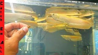 Albino $10,000 Aquarium PLATINUM FISH Tank!