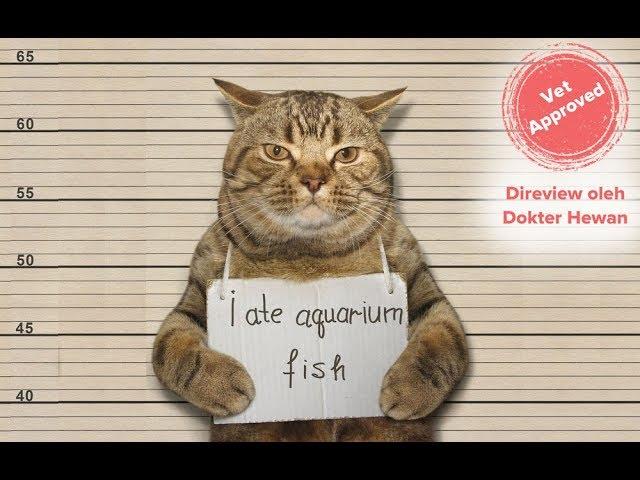 Kucing Lucu Dan Imut Sedunia Kucing Anggora Lucu Banget Kaskus