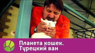 Турецкий ван. Планета кошек | Живая Планета