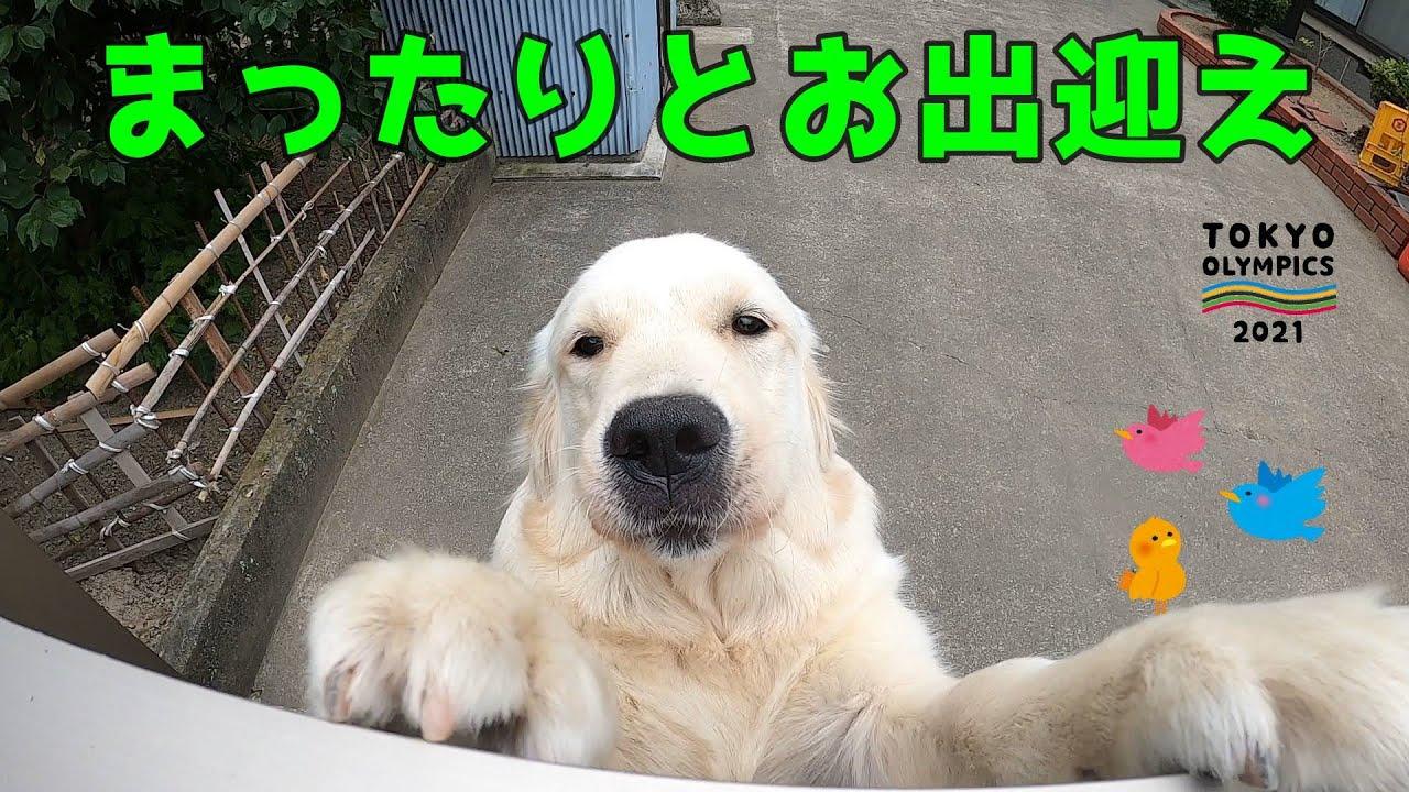 【子犬の夏バテ?】食欲ないけど「ムシャムシャムシャムシャ」食べる姿がかわいすぎる。