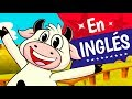 LA VACA LOLA EN INGLES, Lola the cow