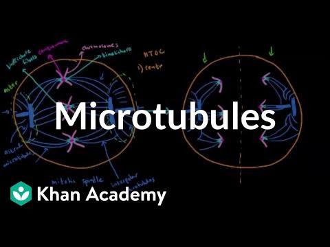 Microtubules | Cells | MCAT | Khan Academy