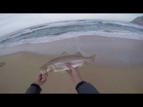 Early Spring Surf Fishing Striper & Pearch In Northern California