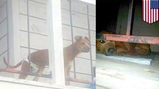 женщину, запостившую фото собаки в памперсе, посадили в тюрьму
