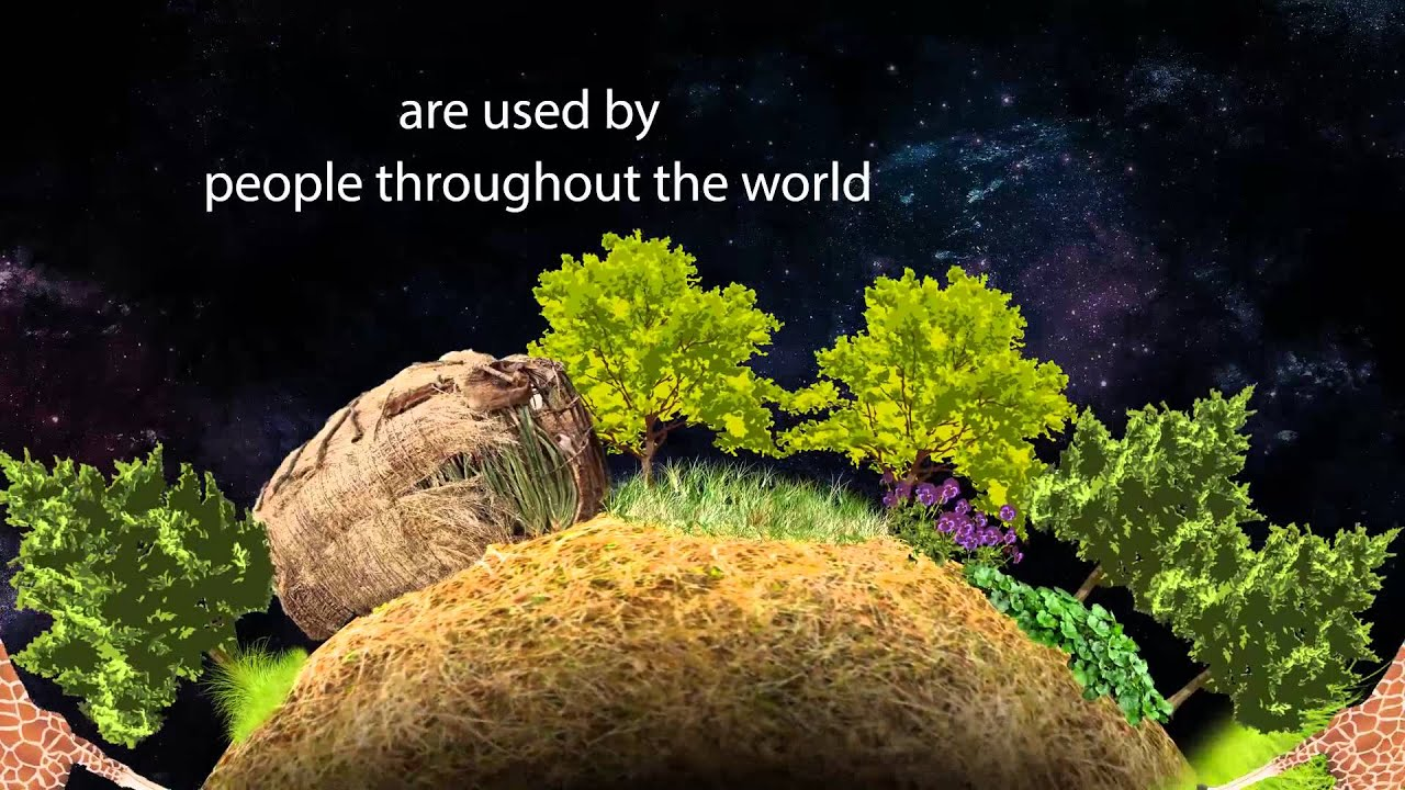 Plant Medicine On Gaia Embracing Earth S Natural Gifts