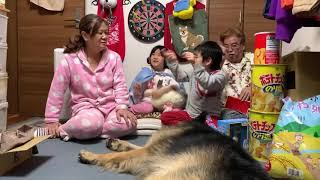 シェパード犬マックと三世代ライブ配信