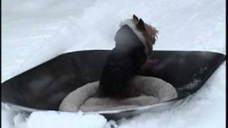 Dofitness- Homemade Training Sled & Snow