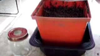 How to Germinate Cranberry Seeds