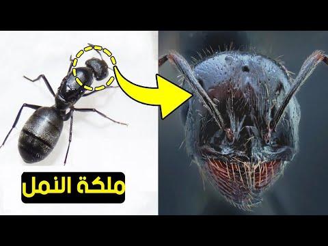 لن تصدق كيف تبدو الحشرات عن قرب !!