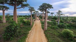 MADAGASCAR | Lemurs, Baobab Trees + Broken Bridges