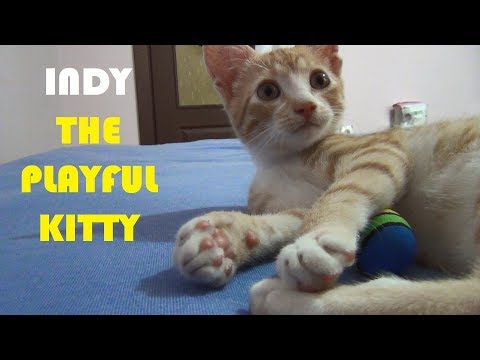 INDY 'the playful kitty' at his new home