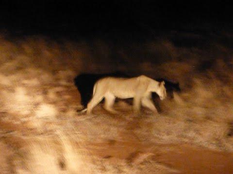 Spirit of Elsa lives on in Meru National Park!