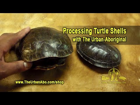 Processing Turtle Shells w/ The Urban-Aboriginal