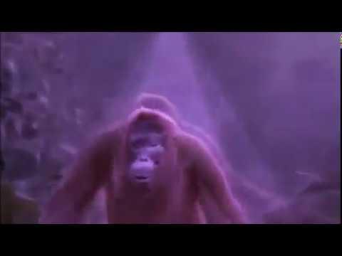 Affe tanzt Mushi Tanz