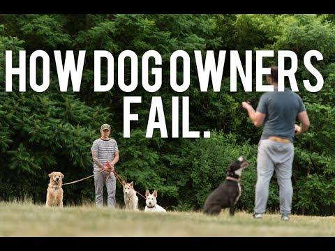 Dog Training- How great dog owners fail/ How awesome dog trainers fail.