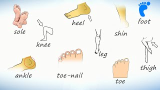 Нога (тело человека). Слова на английском