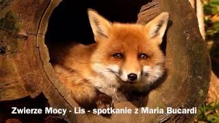 360.Lis - Zwierze Mocy - spotkanie z Maria Bucardi wrozka szamanka doradca duchowym
