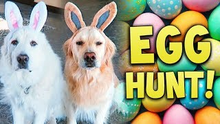 DOG EASTER EGG HUNT AND EGG CHALLENGE! (Super Cooper Sunday #138)