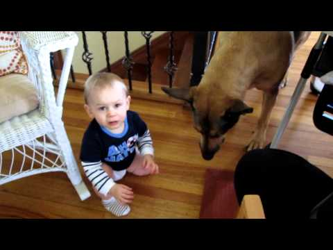 Dog Steals Baby's Food