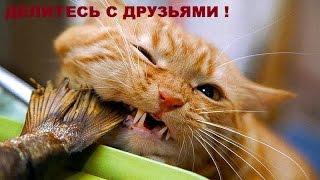 Коты воришки