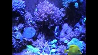 125 Gallon Reef Led Lights