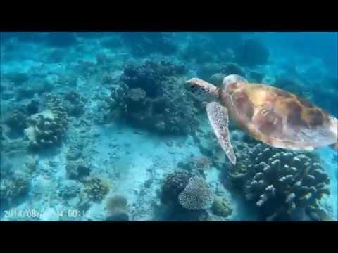 [1080p HD] Scuba diving & snorkeling at Sabah, Malaysian Borneo