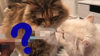 ◯◯◯で毛づくろいすると母猫の感覚に激似らしい!? thumbnail