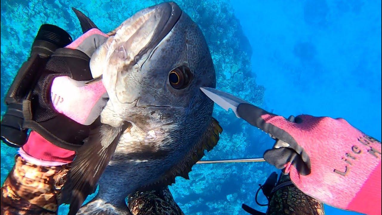 素潜りで古代魚みたいな魚を獲って食べてみた。