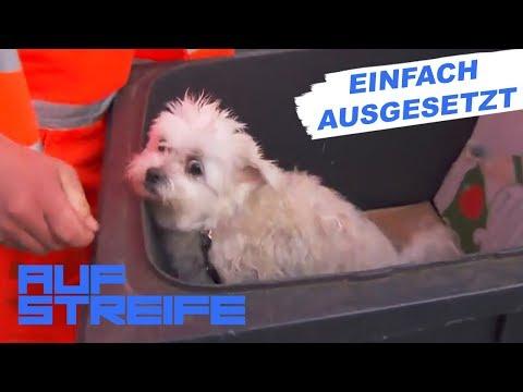 Tragische Entdeckung: Hund in Mülltonne gefunden   Auf Streife   SAT.1 TV