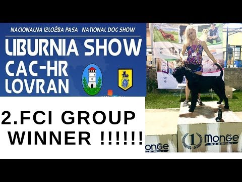 Giant Schnauzer wins 2. FCI group on CAC Opatija 2018 dog show - BlackDogProduction
