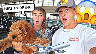 Traveling With Our Puppy... *GONE WRONG*