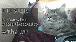 5 Tips for traveling 3.5 days by car with a cat!
