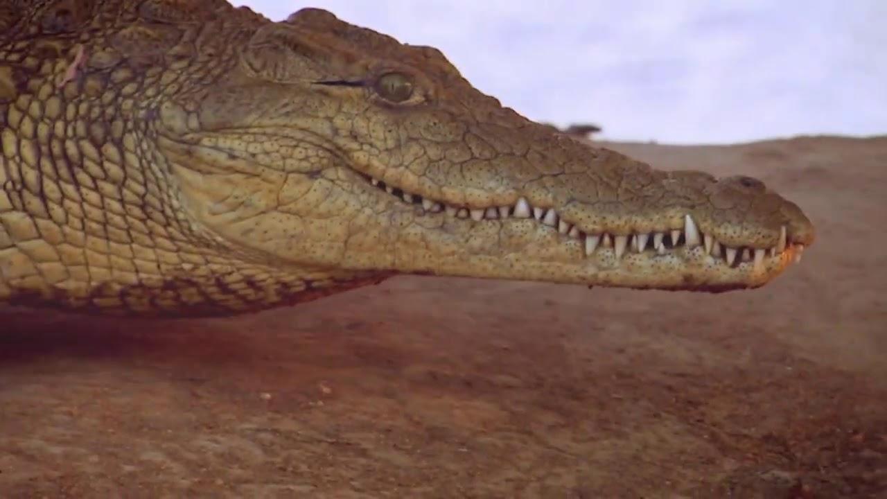 آليات هجوم الحيوانات المفترسة| ناشونال جيوغرافيك أبوظبي