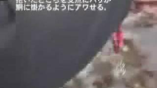 アオリイカエギングノウハウ紹介12アワセの方法 thumbnail