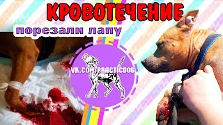 18+ Собака порезала АРТЕРИЮ | кровотечение у собаки | питбуль порезал лапу