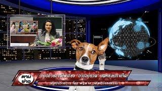 หมาอ่านข่าว ช้อปช่วยชาติไฟเขียว 'อาบอบนวด' ลดหย่อนภาษีได้