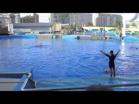 Valencia aquarium dolphin show l 39 oceanografic for Aquarium valencia bar