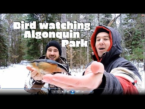 The Bird Bros. Ep.24- Algonquin Provincial Park, The raffle winner experience!