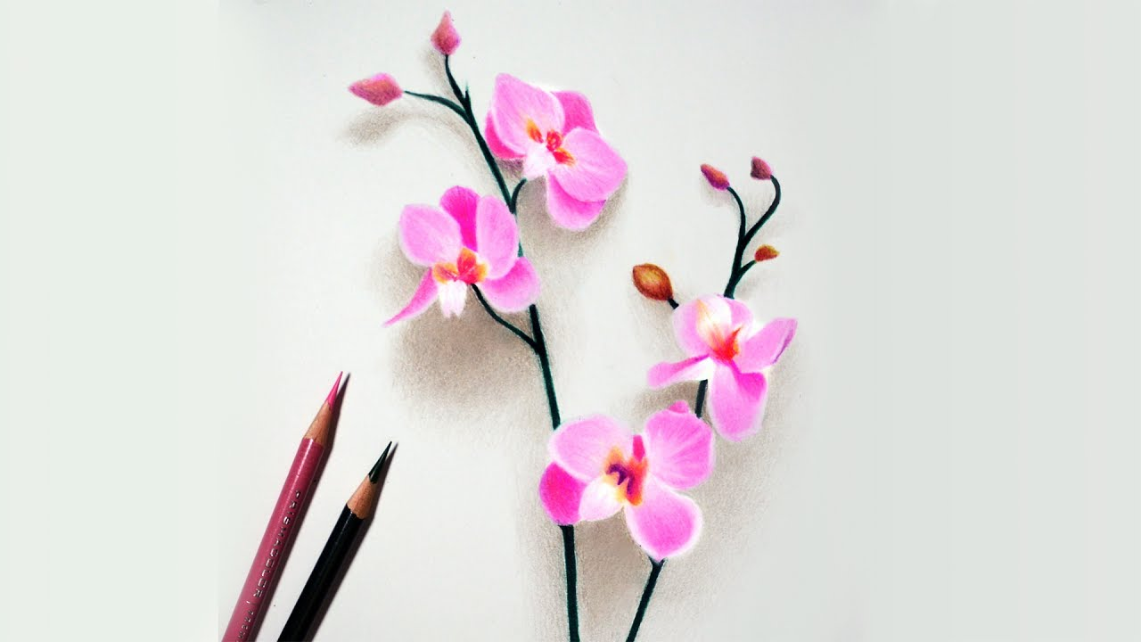 Pictures of orchids to color